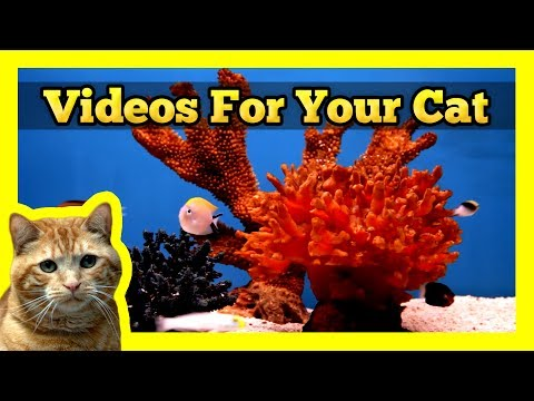 Videos for your Cat - Fish Tanks (Trigger Fish, Yellow Wrasse, Domino Damsel)