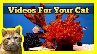 Videos for your Cat - Fish Tank (Trigger Fish, Yellow Wrasse, Domino Damsel)