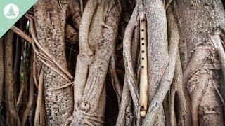 Bamboefluitmuziek, Aziatische muziek, meditatie, ontspannen