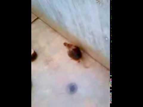 Affen Sex Im Zoo video