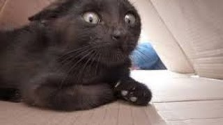 Funny cats scared of random things - Funny cats compilation