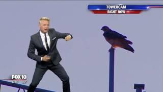 Bird interrupts Cory's forecast