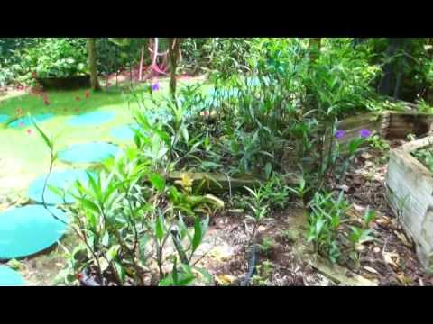 Gardens of Antigua featuring  Martha Watkins Gilkes's Garden