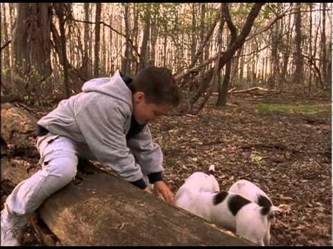 Miracle Dogs is listed (or ranked) 15 on the list The Best Josh Hutcherson Movies