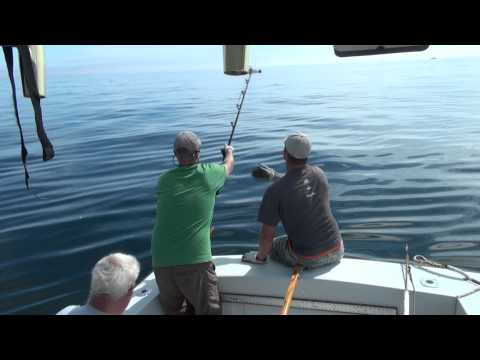 Blue fin Tuna Fishing off Gloucester MA 9/28/11 bluefin tuna 76 inch giant & two fish in two days.