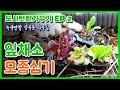 녹색연합 성북동 사무실 텃밭가꾸기 EP2