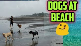 Dogs at beach 😋 ! Funny dogs compilation 😊