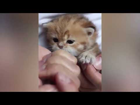 Being Too Happy | Very Funny Cat Videos