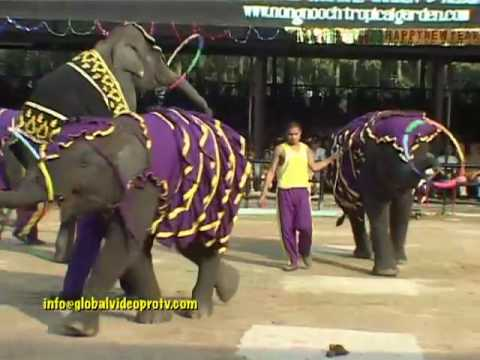 ELEPHANTS GOT TALENT, PAINTING, etc. PATTAYA, THAILAND