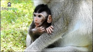 Pity Newborn Monkey 5day Mother Don 39 T Have Enough Milk