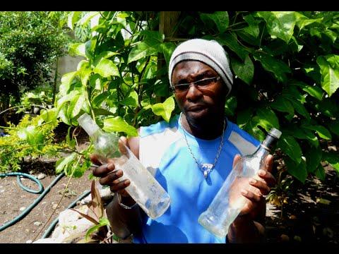 Homemade Water Globes Watering Globe Agrosuede