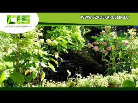 Szkółka Roślin Ozdobnych W Zielonej Górze