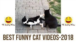 Best FUNNY CAT videos 2018  | vol.1 | The Laughing Theory