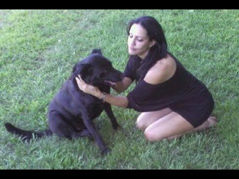 How to teach your dog to talk!  Video 1