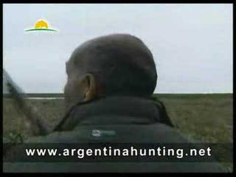 Duck hunting in Argentina - www.sycsporting.com