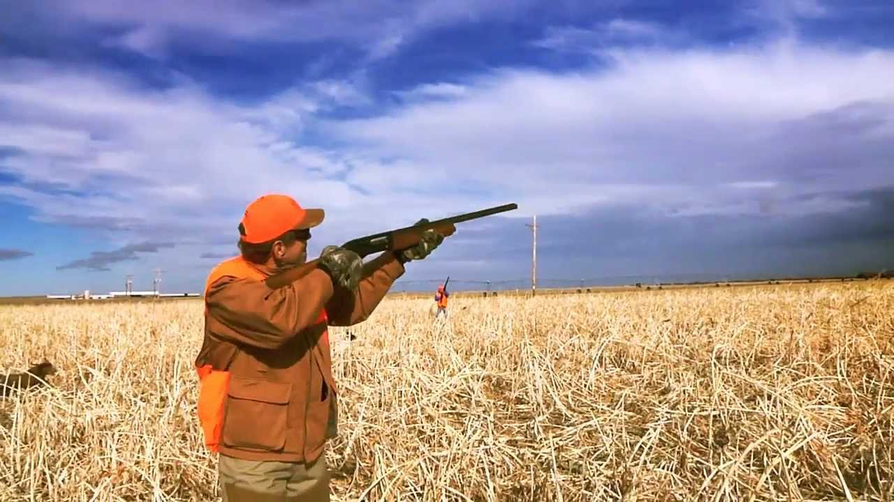 Pheasant hunting in kansas with ruff house outfitters www for Kansas fishing regulations