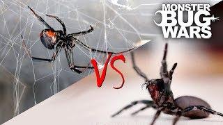 Spider vs Spider Showdowns #1-5 | MONSTER BUG WARS