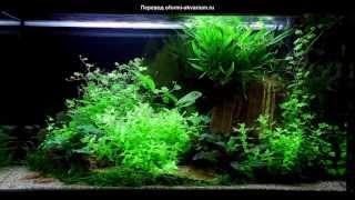 Как сделать задний фон для аквариума своими