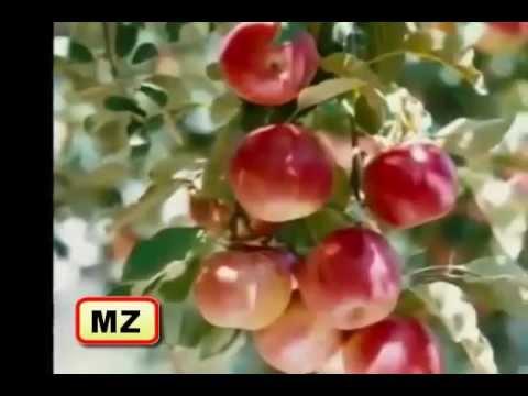 Surah Rahman With Urdu Translation - Qari Ubaid Ur Rehman By Mz Studio video