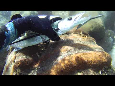 Philippines Spearfishing with Josvic (1080p HD)