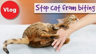 How to stop your cat from biting you
