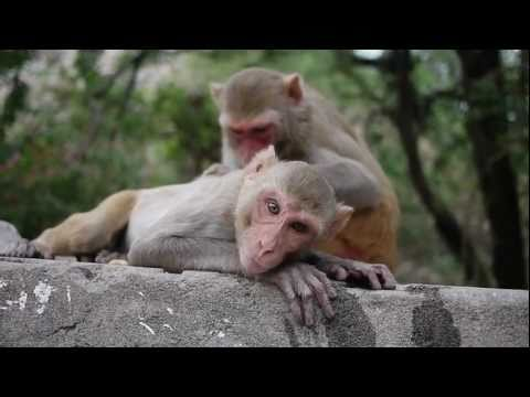 I AM KLOOT - I Still Do (monkey)