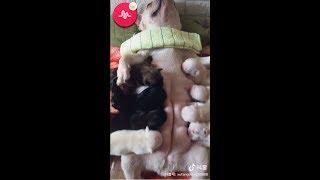 Funny Cute Animals: Tik Tok Pets Compilation