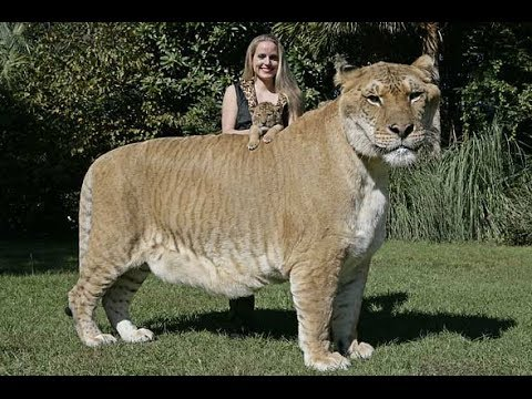 10 Most Amazing Animal Hybrids