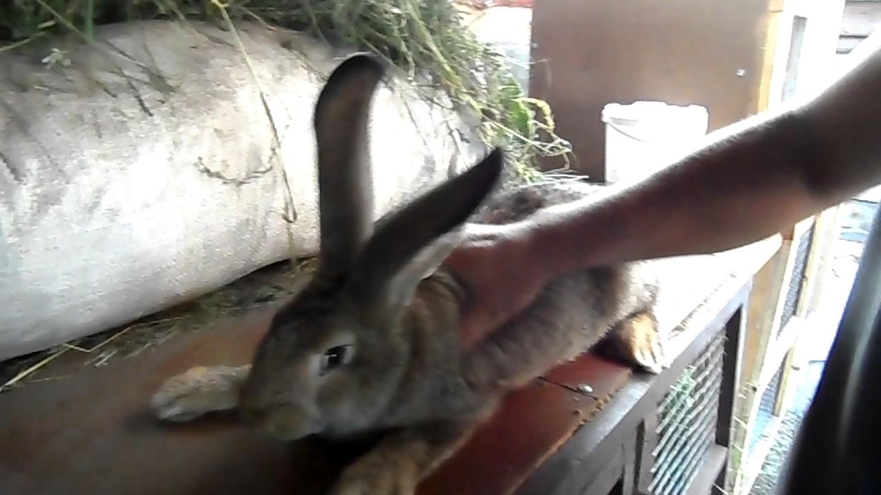 Чем привить кроликов в домашних условиях 160