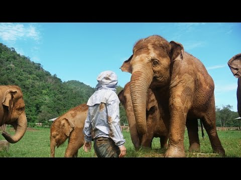 This Woman Rescued 200 Elephants - Elephant Nature Park