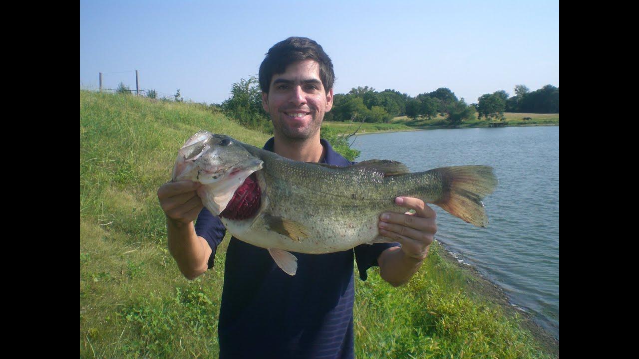 Carolina rig trophy largemouth hat cam bass youtube for Carolina fishing tv