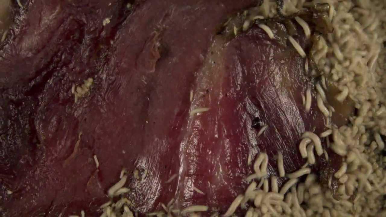maggots eating flesh - photo #7