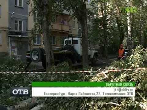 Кто имеет право спилить деревья во