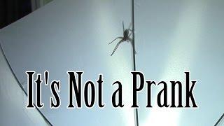 HUGE Spider in House - Definitely NOT a Prank, bro!