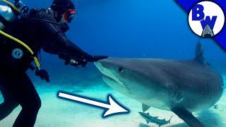 Hitching a Ride on a SHARK!?
