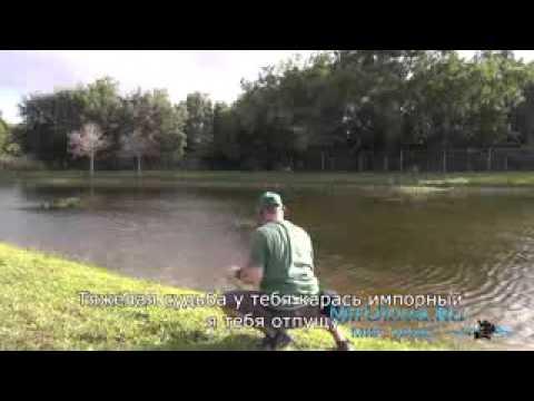 прогноз клева рыбы на 10 дней в в-багачке полтавской