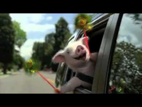 Geico Little Piggy Commercial - Extended video