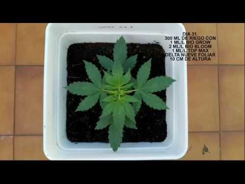 Iluminacion marihuana interior bajo consumo