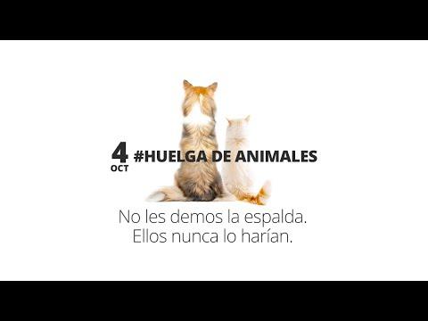 Fundación Affinity convoca una huelga de animales