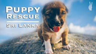 Saving a Puppy in Sri Lanka's Surf Capital   Mirissa & Galle Travel Guide