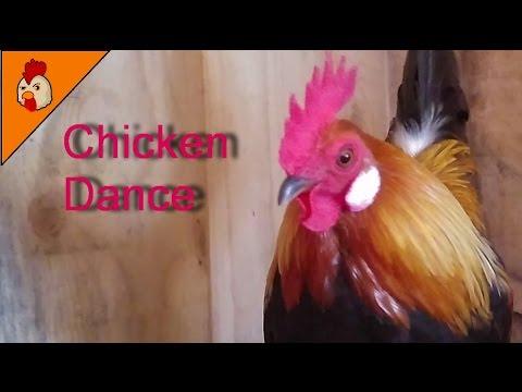 Chicken dance song