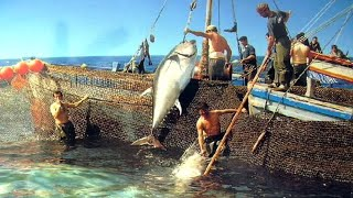 Can You Believe This Fishing? - BIG STINGRAYS