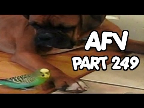☺ AFV Part 249 (NEW!) America's Funniest Home Videos (Funny Clips Fail Montage Compilation)