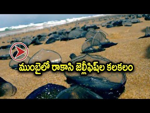 ఒక్కసారి కుడితే జస్ట్ 20 గంటలపాటు నొప్పి ఉంటుందట!!! | Oneindia Telugu
