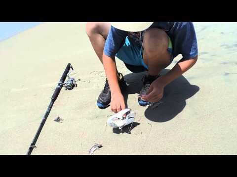Sand shark fishing in North Carolina