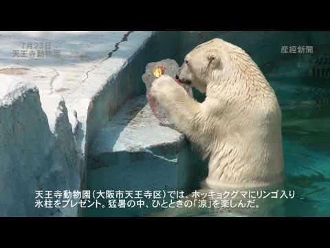 ホッキョクグマ「ゴーゴ」に氷柱プレゼント