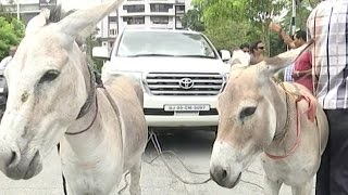 Car is Pulled By Donkeys in Protest