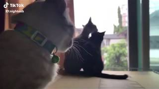 Funny Cats   when the cat is sad for love   The Sad Love Story of cats
