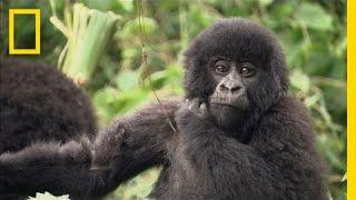Endangered Species Defender Wins Nat Geo's Highest Honor
