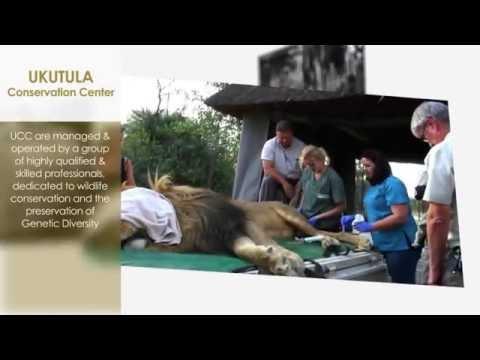 UKUTULA Conservation Center (UCC) - HD